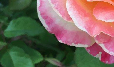 detalle de la misma rosa en formato vectorial, donde se aprecia la perdida de realidad al no tener pixeles.